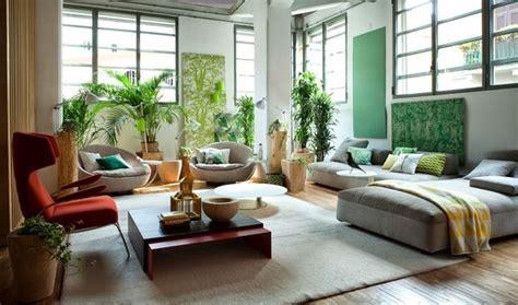 pianta verde da interno piante da interno come avere cura delle piante in estate