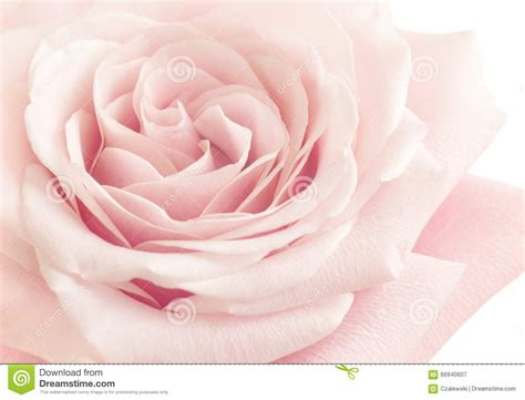 pink flower lights light pink flower stock photo image 66940607