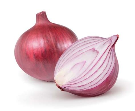 onions bad for dogs can dogs eat onions or are onions bad for dogs and why