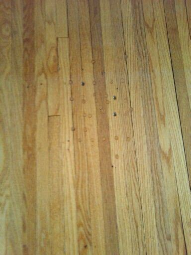 How To Get Rid Of Squeaky Floors by 17 Best Images About Hardwood Floor Disasters On