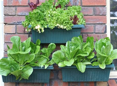 Colorbond Planter Boxes by 27 Best Images About Wall Vertical Gardens On