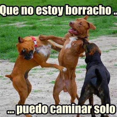 fotos graciosas para borrachos imagenes chistosas de animales con frases imagenes de amor
