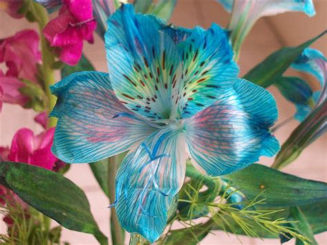 imagenes asombrosas y bellas flores hermosas mis preferidas im 225 genes taringa