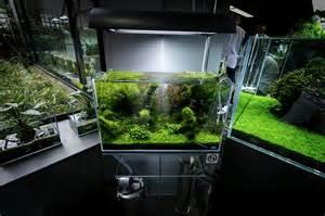 ada nature aquarium gallery beautiful moments of the