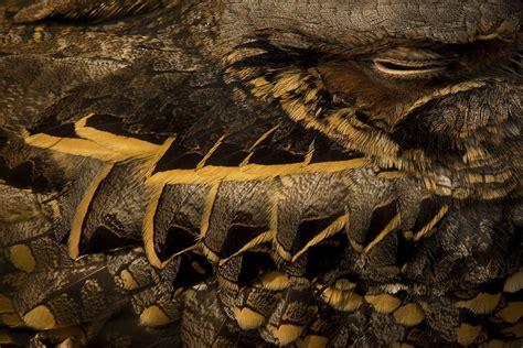 best wildlife photography wildlife photographer of the year 2015 the atlantic