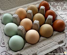 color of eggs a rainbow of egg colors what breed of chicken lays which