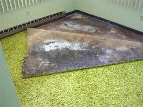 Mould In Carpet Health Risks by White Mold In Basement White Mold Removal Tips