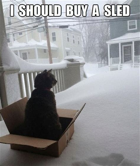 Funny Snow Meme - a funny cat in the snow dump a day