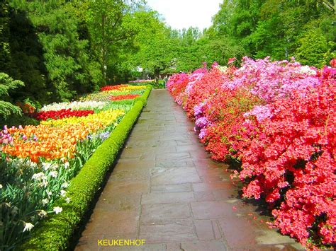 giardini fioriti tutto l anno yourwe i fiori a bulbo pi 249 belli mondo il parco di