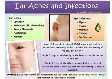 essential oils for ear infection living essential oils for ear aches or ear infections essential oils