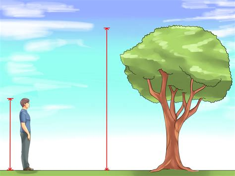 picture height 4 ways to measure the height of a tree wikihow