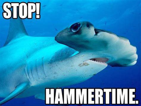Funny Shark Meme - 24 funny shark week pictures smosh