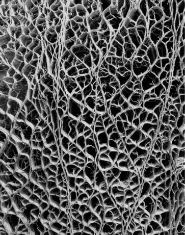 Patterns In Nature Chemicals Found In Cells | molecular cell structure of cactus google search hotel