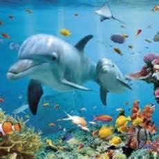 related keywords amp suggestions for ocean habitat