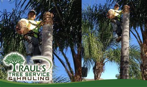service murrieta raul s tree trimming murrieta