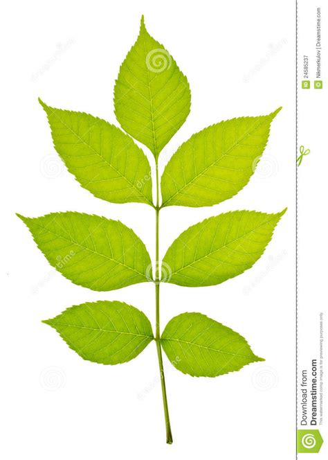stem with few green leaves stock image image of grow