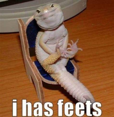 Lizard Meme Hehehe - funny animals 4 11