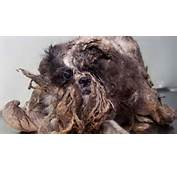 Matted Shih Tzu  What Happens When You Dont Love A Dog Gracie Lu