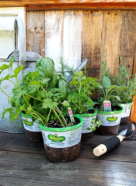 tips for planting a container herb garden tips for planting a container herb garden