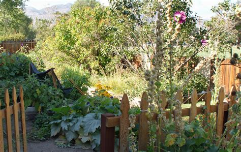 Winter Vegetable Garden California Time For Harvest Or Time For Planting