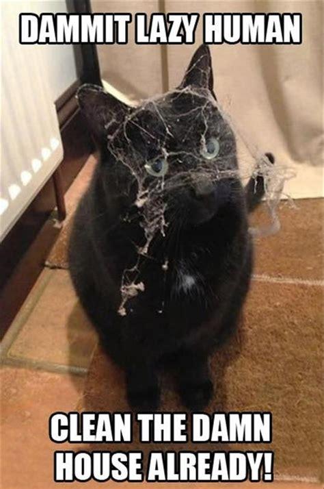 cat lazy human dump a day