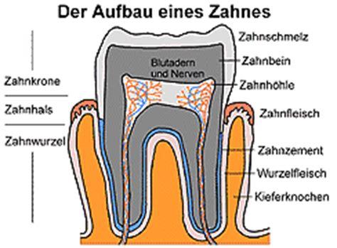 Beschriftung Zahn by Mediendatenbank Biologie Zahn