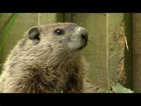 groundhog day kid friendly groundhog day ground hog and on
