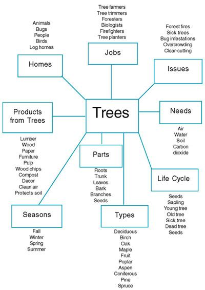 Ecrp Vol 6 No 1 Looking At The Trees Around Us Topic Web Template