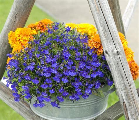 piante da giardino in ombra piante da ombra guida completa per un giardino fiorito