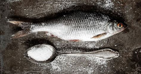 cuisiner du sandre quelle est la m 233 thode de conservation du sandre
