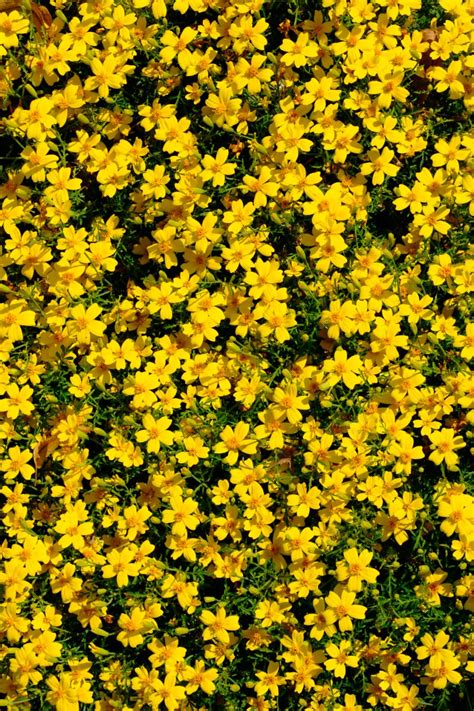 yellow flowering perennials for sun thin blog