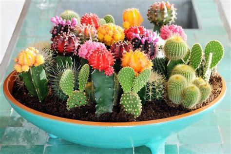 Home Interiors And Gifts Catalog Make A Mini Cactus Garden Brandsmart Com Au Green