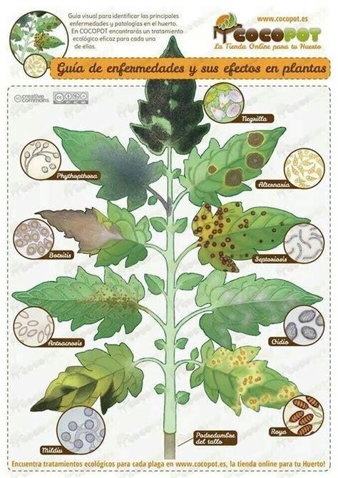 enfermedades de las plantas de interior enfermedades de las plantas jardineria pinterest