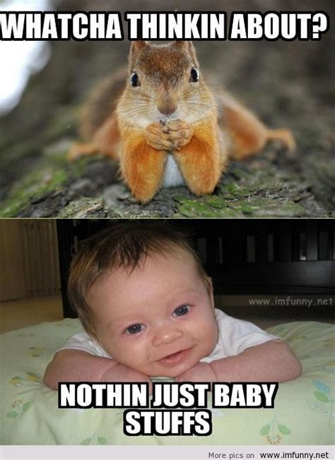 Cute Baby Animal Memes - baby animal funny quotes quotesgram