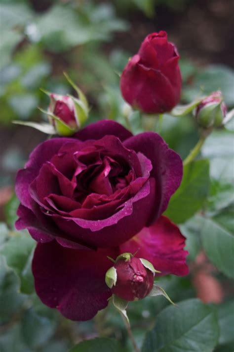 bellas imágenes in english mejores 149 im 225 genes de fotos de flores en pinterest