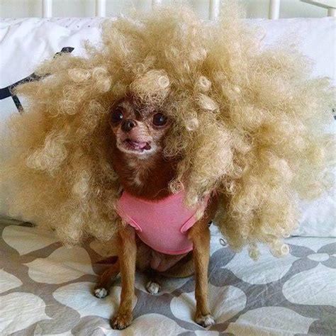 imagenes animales con pelo tratamiento para la caida de pelo en perros facilisimo com