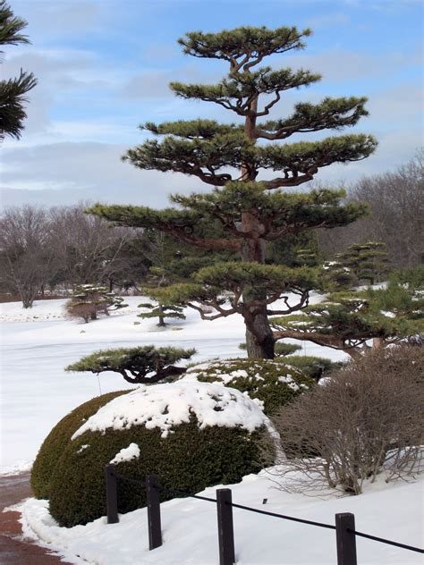 japanese garden in winter a japanese garden in winter the hortiholic