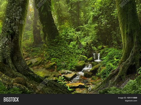 Tropical Jungle and dense tropical jungle in southeast asia stock