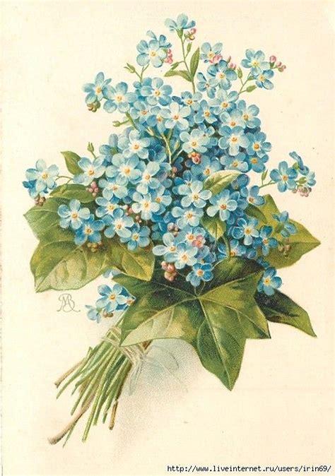 printable forget me not flowers 3197 best vintage floral images images on pinterest