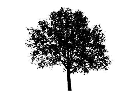 white tree silhouette png pngdot com free png images