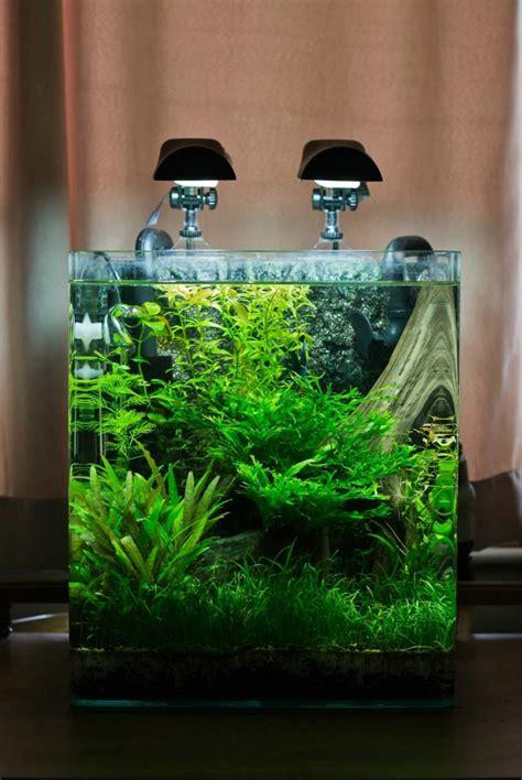 Aquascape Aquarium Id 233 Es Et Astuces Comment Cr 233 Er Un Nano Aquarium