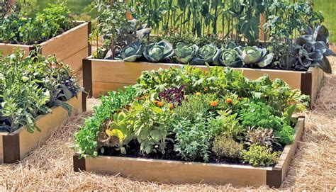 a guide to raised beds gardening in raised beds square foot gardening gardener s supply