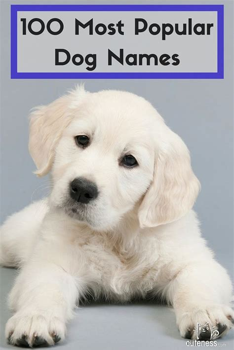most common golden retriever names names popular and the 100 on