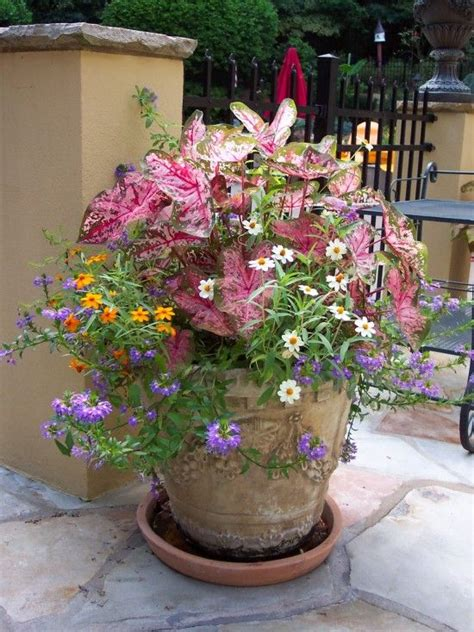 potted paper flower ideas large container planting ideas design pictures remodel decor and ideas page 6 garden