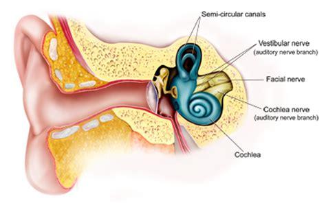 vestibular neuritis vestibular neuronitis epidemic neurolabyrinthitis