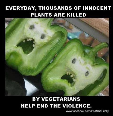 Vegetable Meme - wall photos funny and fun vegetarian joke