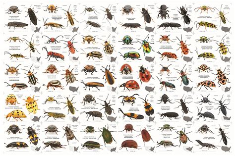 Finding Bed Bugs An Inordinate Fondness For Barely Scratching The Tip Of