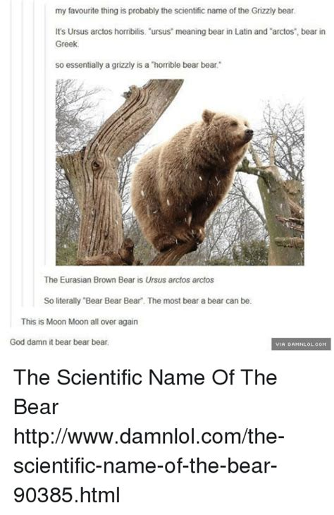 scientific name of grizzly memes of 2016 on sizzle