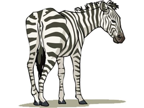 imagenes de animales cebra cebra gif animado gifs animados cebra 184136