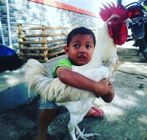 download mp3 suara adzan indonesia download suara ayam pelung panjang dan merdu mp3